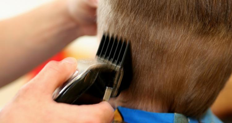 balding clipper image